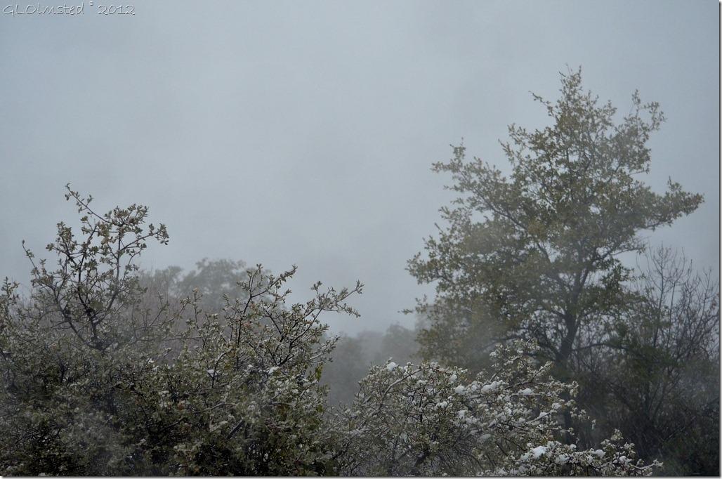 01 Fog covered Weaver Mts & snowy trees Yarnell AZ (1024x678)