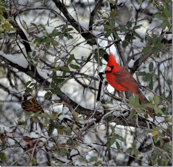 02 Sparrow & cardinal Yarnell AZ (1024x992)