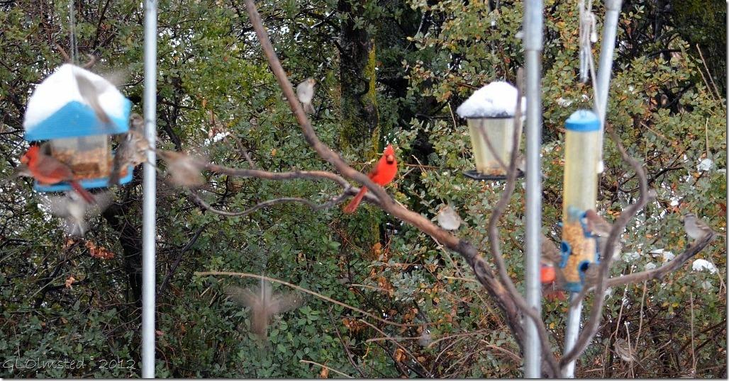 03 Three cardinals Yarnell AZ (1024x534)