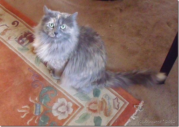 05 761 Berta's cat Sara Yarnell AZ (1024x724)