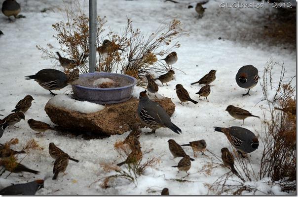 05 Birds in snow Yarnell AZ (1024x678)