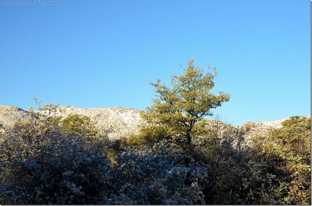 08 Good morning sunshine on Weaver Mts Yarnell AZ (1024x678)