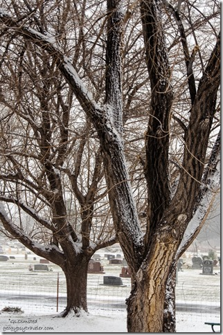 Snow on trees from RV Kanab Utah