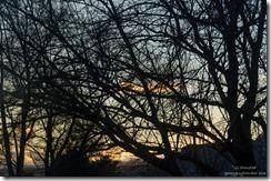 Sunset through trees Kanab Utah